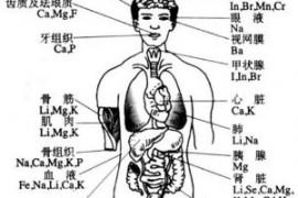 50多种元素在人体内的分布